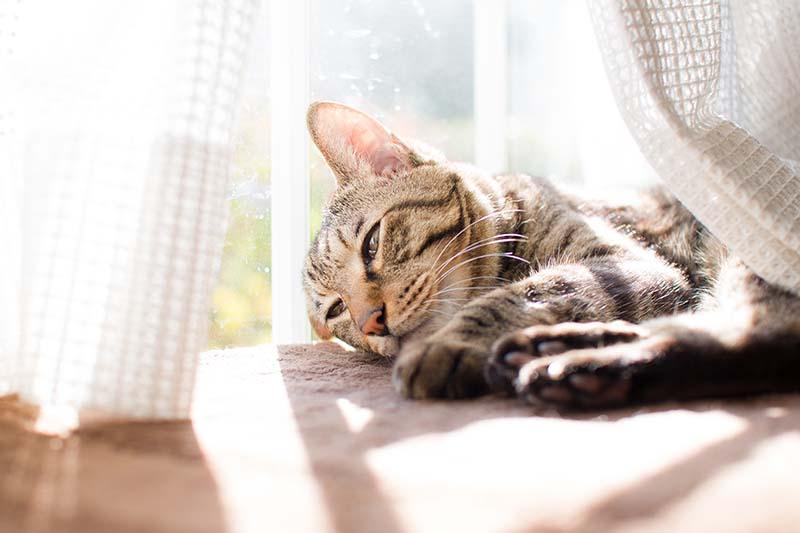 猫と暮らすためのリフォーム