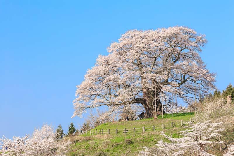 岡山県のオススメお花見スポット5選